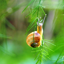 by Petra Cvetko - Animals Other ( hanging, nature, grass, snail, small, animal,  )