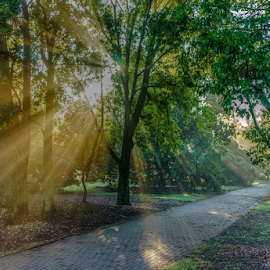a walk in the park by Peter Schoeman - City,  Street & Park  City Parks ( grasses, water, spider webs, fog, trees, sunrise, fields, renewal, green, forests, nature, natural, scenic, relaxing, meditation, the mood factory, mood, emotions, jade, revive, inspirational, earthly )