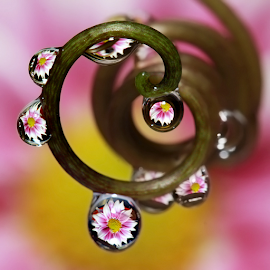 spiral by Yustinus Slamet - Nature Up Close Natural Waterdrops