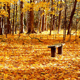 Lonely bench by Leo Padilla - Landscapes Prairies, Meadows & Fields ( fall, color, colorful, nature )