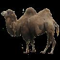 Camel Sticker icon