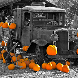 The Orange Truck by  J B  - Nature Up Close Gardens & Produce ( orange, pumpkins, old truck, halloween )