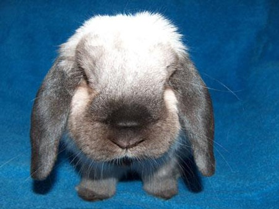 cute rabbit photo 6