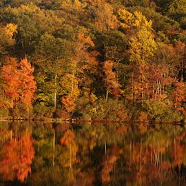 Water Reflections by Vrinda Mahesh - Nature Up Close Trees & Bushes ( water reflection, autumn, fall, lakes, reflections, water reflections of fall colors )