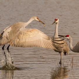 by Sam.simon@ipacc.com Sam.simon@ipacc.com - Animals Birds