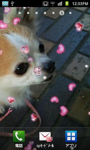 Lovely Heart LiveWallpapr