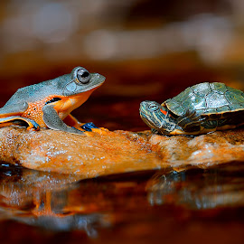 Best Friend..... by Dwi Yulianto - Animals Amphibians ( reptiles, butterfly, nature, nature up close, spider, fishing, makro, amphibians )