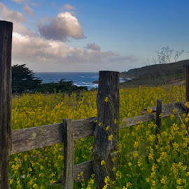 Fence Line, Monterey by Patrick Flood - Landscapes Mountains & Hills ( canon, fence, photosbyflood, mustard, monterey, california, ocean, scenic route, ocean view, highway one )