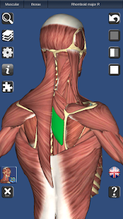 App 3D Bones and Organs (Anatomy) APK for Windows Phone