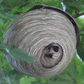 Bee Hive by Tina Marie - Nature Up Close Hives & Nests ( bee hive )