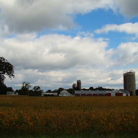 The Soybeans And The Barn by Yvonne Collins - Buildings & Architecture Other Exteriors ( buildings, architecture, other exteriors, soybeans, photography )