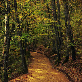 Golden Street by Adrian  Limani - Landscapes Forests ( nature, forest, gold, landscape )