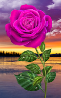 Screenshot of Rose. Magic Touch Flowers