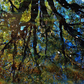 Reflections by Nichole Doney - Nature Up Close Trees & Bushes