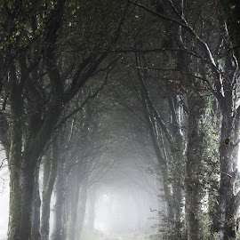 Into the Mist by Nathan Jesse - Landscapes Travel ( ireland, fog, green, driveway, trees, travel, mist )