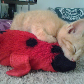 Nap time by Patricia Johnson - Animals - Cats Kittens