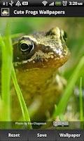 Screenshot of Cute Frog Wallpapers