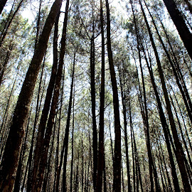 Diantara pohon by Joe Antoro - Landscapes Forests ( hutan )