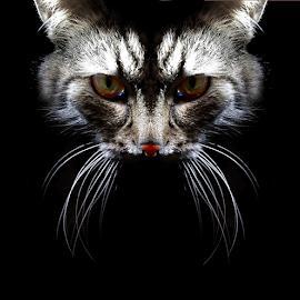 *** by Jurijs Ratanins - Instagram & Mobile Other ( mobilography, cat, pet, portrait, animal )