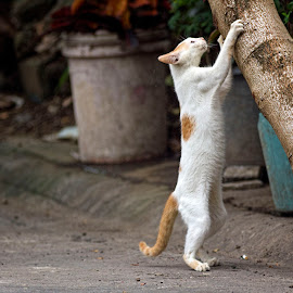 by Ohmz Pineda - Animals - Cats Playing