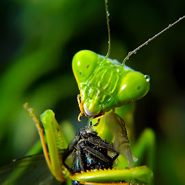 cute pose..!! by Hendrata Yoga Surya - Instagram & Mobile Android ( insects, praying mantis )