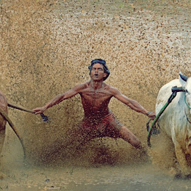 Pacu Jawi Race by M Reza Saptodi - News & Events Entertainment ( #pacujawi #indonesian #padang )