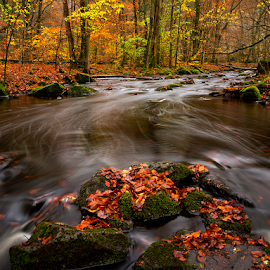 Autumnleaves in the creek by Peter Samuelsson - Nature Up Close Water