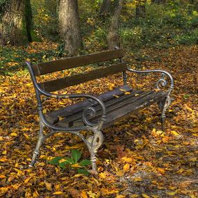 Lonely bench by Zeljko Kliska - City,  Street & Park  City Parks ( hdr, park, autumn, parks, zagreb,  )