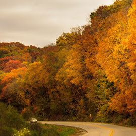 Road Lined with Gold by Shari Brase-Smith - City,  Street & Park  Vistas ( orange colored leaves, fall, scenic, travel, road, autumn colors )