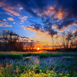 Almost A Whisper by Phil Koch - Landscapes Prairies, Meadows & Fields ( vertical, photograph, farmland, yellow, storm, leaves, love, sky, nature, tree, autumn, shadow, snow, flower, wind, orange, twilight, agriculture, horizon, portrait, dawn, winter, environment, season, national geographic, serene, trees, floral, inspirational, wisconsin, natural light, phil koch, spring, sun, photography, farm, ice, horizons, rain, inspired, clouds, office, park, green, scenic, morning, shadows, wild flowers, field, red, blue, sunset, fall, peace, meadow, summer, sunrise, earth, landscapes )