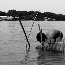 Fishing by Apu Jaman - People Street & Candids