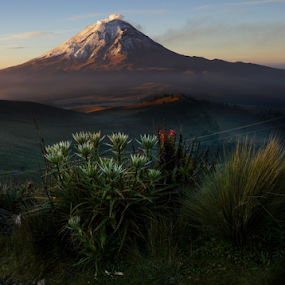 Sunrise in the  top by Cristobal Garciaferro Rubio - Landscapes Mountains & Hills ( popo, rise, mexico, popocatepetl, sunrise, flowers )