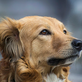 by Jignesh Chauhan - Animals - Dogs Portraits ( #GARYFONGPETS, #SHOWUSYOURPETS )