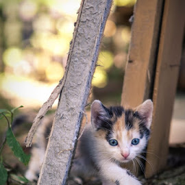 Exploring by Fotografia Eva Stachova - Animals - Cats Kittens ( wild, potrait, kitten, time, nature, garden, first, bokeh, young, exploring,  )