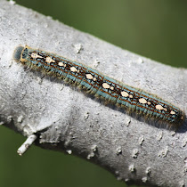 Caterpillar Watch SouthEast US