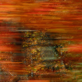 Fall Colors At 65MPH by Joe Edwards - Abstract Patterns ( fall, color, colorful, nature,  )