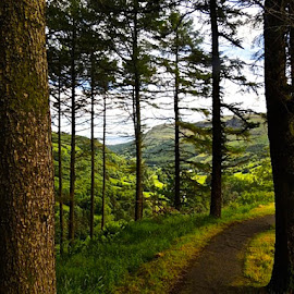 Fairytale Forest by T. Rick Jones - Landscapes Forests ( fantasy, glenariff, ireland, green, path, trees, fairytale,  )