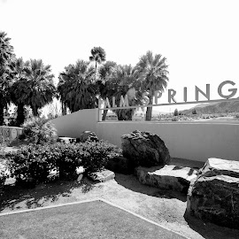 Palm Springs Aerial Tram Center by Art LA - Buildings & Architecture Office Buildings & Hotels ( desert, palm springs visitors center, black and white, palm springs, palm trees )