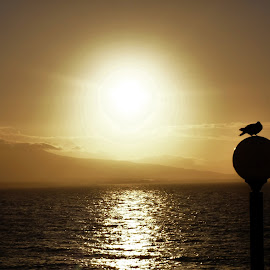 Along the road to Athens by Elyse Chin - Novices Only Landscapes ( bird, athens, ocean, sunrise, lamp post )