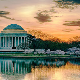 First Light by Colin Gilyeat - Buildings & Architecture Public & Historical ( jefferson memorial, washington dc, cherry blossom, sunrise )