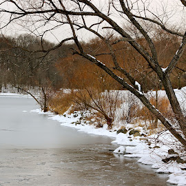 Frozen. by Peter DiMarco - Nature Up Close Trees & Bushes ( winter scene, ice, trees and lake, frozen lake, frozen )