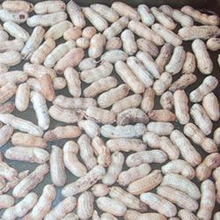 Roast Peanuts Recipes