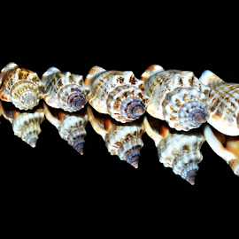 Shell all ages :) by Manuela Dedić - Artistic Objects Still Life (  )