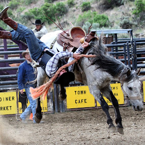 by Brandi Nichols - Sports & Fitness Rodeo/Bull Riding ( montana, rodeo, rough stock )