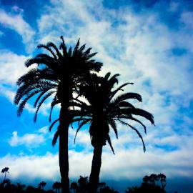 Twin Palms by Silvan Saria - City,  Street & Park  Skylines ( palm, sky, tree, blue, beautiful, dark, black, photography, palmtree )