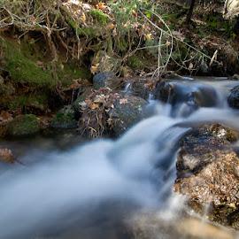Río Pradillo by Eduardo Menendez Mejia - Nature Up Close Water ( mushroom, vida, españa, tokina 12-24, camorritos, madrid, río, menendez, eduardo, musgo, cercedilla, spain, navacerrada, nikon, d5100, river )