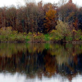 Forest in Lake by Nat Bolfan-Stosic - Landscapes Forests ( reflection, autumn, trees, lake, forest )