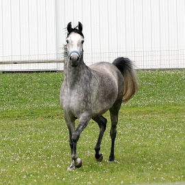 For Christie & Barb ,  MA Answered Prayer by Kathy Polcsan - Animals Horses