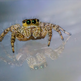 by Dolphin Soh - Animals Insects & Spiders