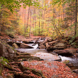 Autumn Drizzle on Kitchen Creek by Gene Walls - Landscapes Forests ( water, stream, kitchen creek, waterfall, leaves, ricketts glen, autumn, foliage, fall, creek, trees, whitewater, ganoga glen, ricketts glen state park )